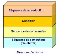 structure d'un virus informatique